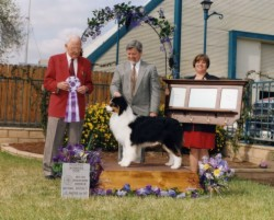 AKC/ASCA Ch. Bayshore Tradition of Milwin