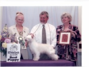 2002 Best Puppy In Show ACCC National Specialty,1st Place 6-9 Puppy Bitch