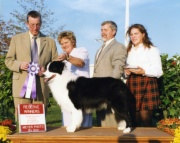 BCSA National Specialty Reserve Winners Dog