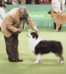 Flash at Crufts 2003 in the BIS ring.