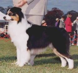 Reserve Winners Dog - 2000 USASA National Specialty