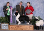 2010 BOB BCSA National Specialty, Best Vetern In Show