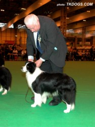 2nd in Open Dog at Crufts 2008. Handled by Mr Eric Broadhurst.