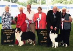 Shocka and Riley winning Pastoral goup 1 and 2 at Windsor