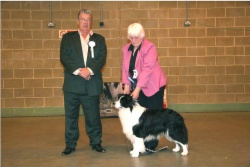 Riley winning the dog CC this year at Southern Border Collie Club. Photo taken by Ron Hawkins.